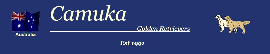 Camuka Golden Retrievers